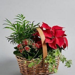 Christmas Planter - Festive Flowers in Westcliff