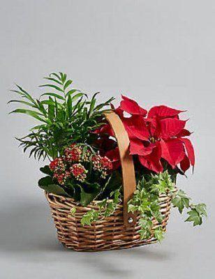 Christmas Planter - Festive Flowers in Westcliff