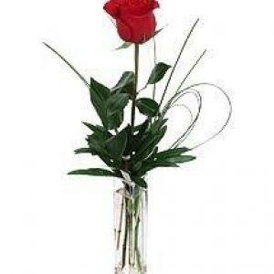Single Red Rose – Valentine Rose