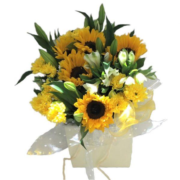 Sunflower Extravaganza